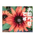 花のスタンプ 4(個別スタンプ:29)