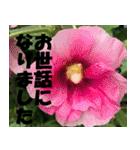 花のスタンプ 4(個別スタンプ:30)