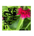 花のスタンプ 4(個別スタンプ:31)