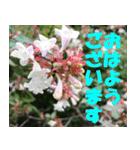 花のスタンプ 4(個別スタンプ:33)