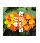 花のスタンプ 4(個別スタンプ:34)