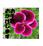 花のスタンプ 4(個別スタンプ:35)