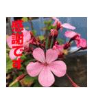 花のスタンプ 4(個別スタンプ:36)