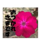 花のスタンプ 4(個別スタンプ:37)
