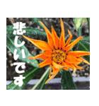 花のスタンプ 4(個別スタンプ:38)