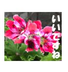 花のスタンプ 4(個別スタンプ:39)