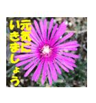 花のスタンプ 4(個別スタンプ:40)