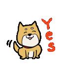 便利な犬たち!ハスキー、プードル、柴犬(個別スタンプ:3)