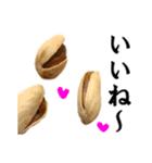 【実写】ピスタチオ(個別スタンプ:06)
