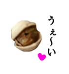 【実写】ピスタチオ(個別スタンプ:07)
