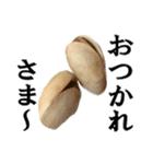 【実写】ピスタチオ(個別スタンプ:19)