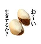【実写】ピスタチオ(個別スタンプ:28)