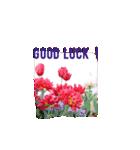 きれいめお花のスタンプ(個別スタンプ:07)