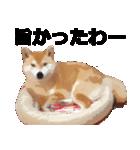 しゃべる柴犬(日常会話編2)(個別スタンプ:02)