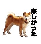 しゃべる柴犬(日常会話編2)(個別スタンプ:18)