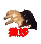 しゃべる柴犬(日常会話編2)(個別スタンプ:20)