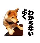 しゃべる柴犬(日常会話編2)(個別スタンプ:27)