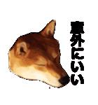 しゃべる柴犬(日常会話編2)(個別スタンプ:30)