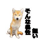 しゃべる柴犬(日常会話編2)(個別スタンプ:32)
