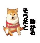 しゃべる柴犬(日常会話編2)(個別スタンプ:34)