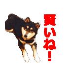 しゃべる柴犬(日常会話編2)(個別スタンプ:38)
