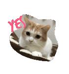 ぷにゃー!(個別スタンプ:02)