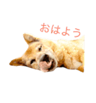 たぁちゃんスタンプ(個別スタンプ:02)