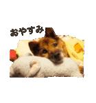 たぁちゃんスタンプ(個別スタンプ:03)