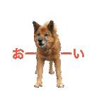 たぁちゃんスタンプ(個別スタンプ:05)