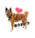 たぁちゃんスタンプ(個別スタンプ:06)