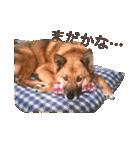 たぁちゃんスタンプ(個別スタンプ:15)