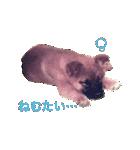 たぁちゃんスタンプ(個別スタンプ:25)