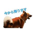 たぁちゃんスタンプ(個別スタンプ:30)