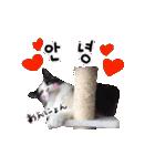 ハングルをしゃべる猫(個別スタンプ:01)