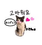 ハングルをしゃべる猫(個別スタンプ:02)