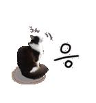 ハングルをしゃべる猫(個別スタンプ:03)