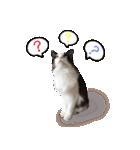 ハングルをしゃべる猫(個別スタンプ:05)