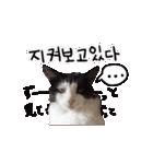 ハングルをしゃべる猫(個別スタンプ:06)