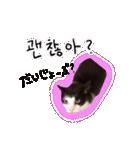 ハングルをしゃべる猫(個別スタンプ:07)