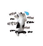 ハングルをしゃべる猫(個別スタンプ:08)