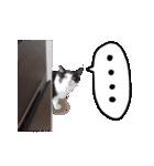 ハングルをしゃべる猫(個別スタンプ:09)