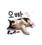 ハングルをしゃべる猫(個別スタンプ:10)
