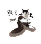 ハングルをしゃべる猫(個別スタンプ:11)