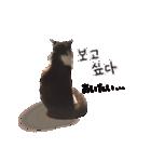 ハングルをしゃべる猫(個別スタンプ:13)