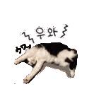 ハングルをしゃべる猫(個別スタンプ:14)