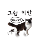 ハングルをしゃべる猫(個別スタンプ:17)