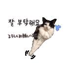 ハングルをしゃべる猫(個別スタンプ:18)