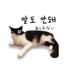 ハングルをしゃべる猫(個別スタンプ:21)