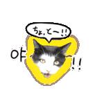 ハングルをしゃべる猫(個別スタンプ:23)