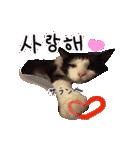 ハングルをしゃべる猫(個別スタンプ:25)